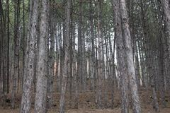 Árvores na montanha de Rila perto de Bachinovo em Blagoevgrad Imagens de Stock