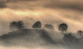 Árvores na névoa. Fotografia de Stock