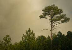 Árvores na névoa fotografia de stock royalty free