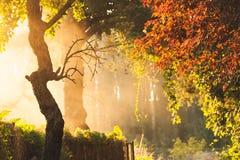 Árvores na névoa Imagem de Stock Royalty Free