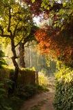 Árvores na névoa Imagem de Stock