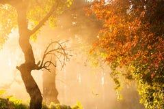 Árvores na névoa Foto de Stock Royalty Free