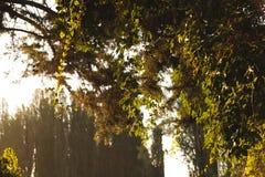 Árvores na névoa Fotografia de Stock