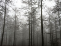 Árvores na névoa Imagens de Stock