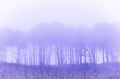 Árvores na névoa com efeito do filtro do vintage imagens de stock