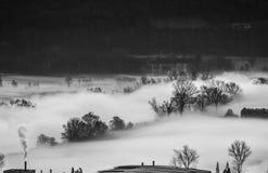 Árvores na névoa da manhã Foto de Stock