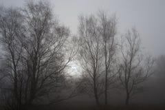 Árvores na névoa da mola Fotografia de Stock Royalty Free
