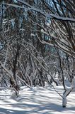 Árvores na neve Fotografia de Stock