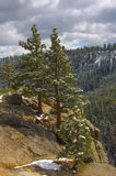 Árvores na neve Foto de Stock Royalty Free
