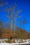 Árvores na neve Imagem de Stock Royalty Free