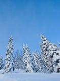 Árvores na neve ilustração royalty free