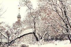 Árvores na neve Fotos de Stock
