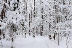 Árvores na neve Foto de Stock