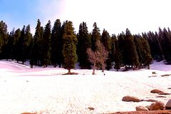 Árvores na neve fotos de stock royalty free