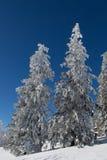 Árvores na neve Fotos de Stock Royalty Free