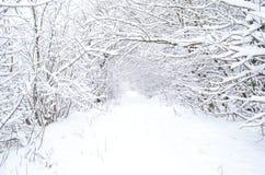 Árvores na neve no inverno no fundo da estrada foto de stock