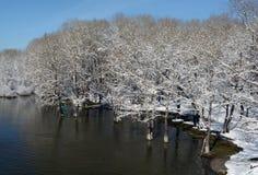 Árvores na neve perto do rio Fotos de Stock Royalty Free