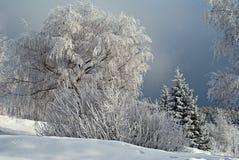 Árvores na neve, tempo de inverno foto de stock royalty free