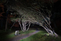 Árvores na noite Foto de Stock