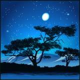 Árvores na noite estrelado Imagens de Stock Royalty Free