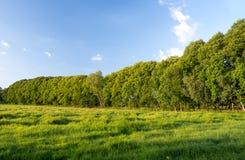 Árvores na paisagem Foto de Stock