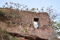 Árvores na parede de um forte velho, Valsad, Gujrat fotos de stock royalty free