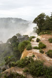 Árvores na parte superior do veiw de Foz de Iguaçu de Argentina Imagem de Stock