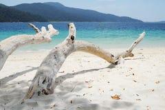 Árvores na praia Fotografia de Stock