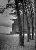 Árvores na praia de Bukit Keluang, Terengganu, Malásia Foto de Stock