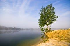 Árvores na praia durante o nascer do sol Foto de Stock Royalty Free