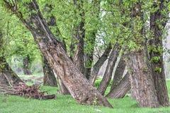 Árvores na primavera Fotos de Stock