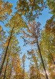 Árvores na queda fotos de stock royalty free