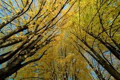 Árvores na queda Fotografia de Stock Royalty Free