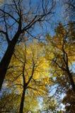 Árvores na queda Fotografia de Stock