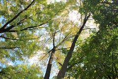 Árvores na queda Vista bonita de baixo de fotos de stock