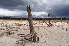 Árvores na represa de Theewaterskloof, represa principal do ` s de Cape Town, com extremamente - baixos níveis fotografia de stock