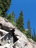 Árvores na rocha fotografia de stock royalty free