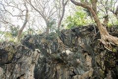 Árvores na rocha fotos de stock