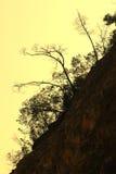 Árvores na rocha de encontro a um céu do por do sol Imagens de Stock Royalty Free
