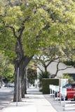 Árvores na rua Fotos de Stock Royalty Free