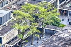Árvores na rua pedestre Fotos de Stock Royalty Free