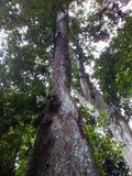 Árvores na selva Imagens de Stock Royalty Free