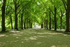 Árvores nas fileiras Imagem de Stock Royalty Free