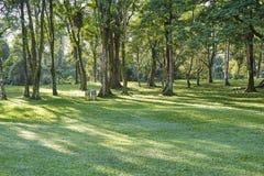 Árvores nas fileiras no parque Fotografia de Stock