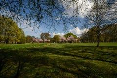 Árvores nas flores Fotografia de Stock