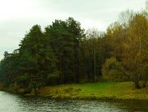 Árvores nas florestas Foto de Stock Royalty Free