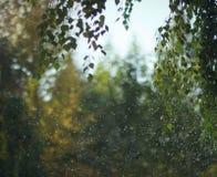 Árvores nas gotas Fotografia de Stock