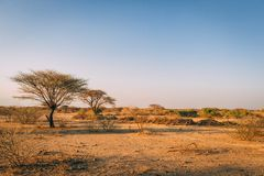 Árvores nas planícies de África foto de stock