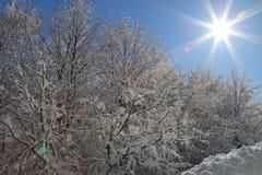 Árvores nevado Imagem de Stock Royalty Free