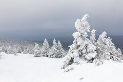 Árvores nevado Imagens de Stock Royalty Free